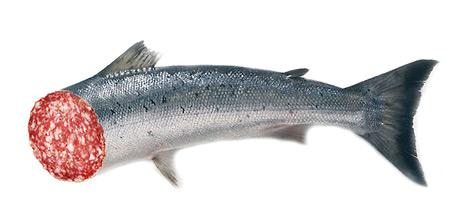 salamifisch